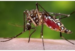 Chikungunya: don't let a small bite turn into a health problem
