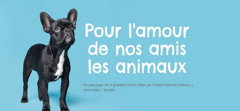 First Animal Exposition in Laval  | Laval Families Magazine | Laval's Family Life Magazine